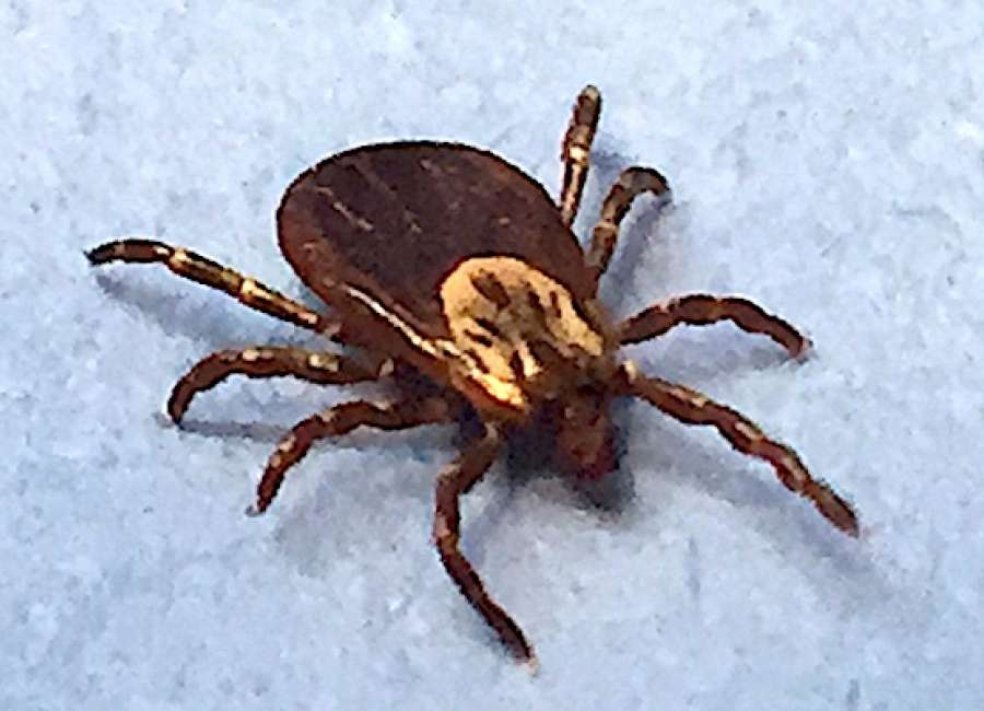 Gardening season means tick season