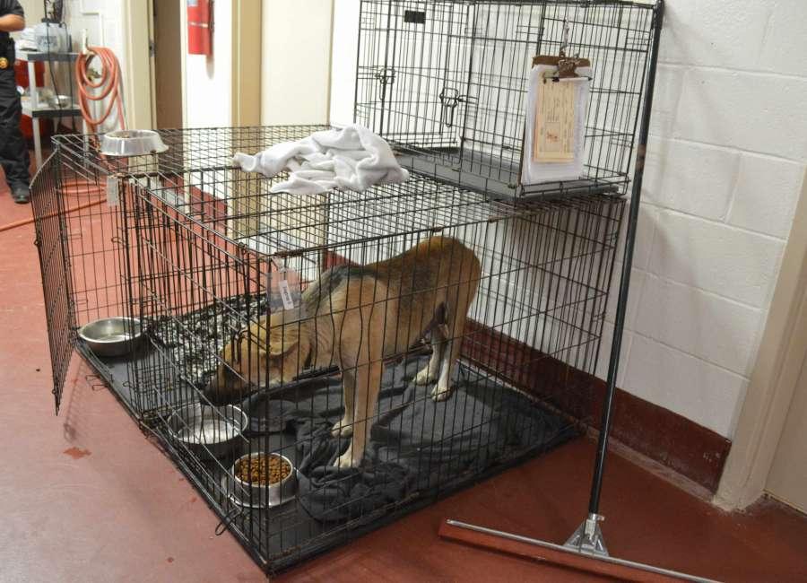 New state rule slashes capacity at animal shelter
