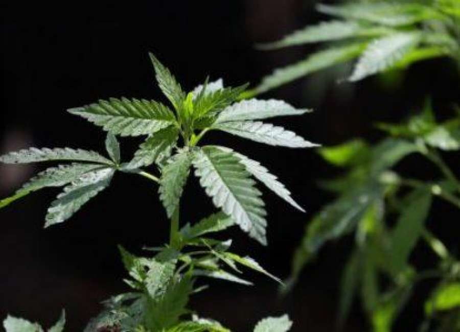 Medical marijuana cards show big increase in Georgia