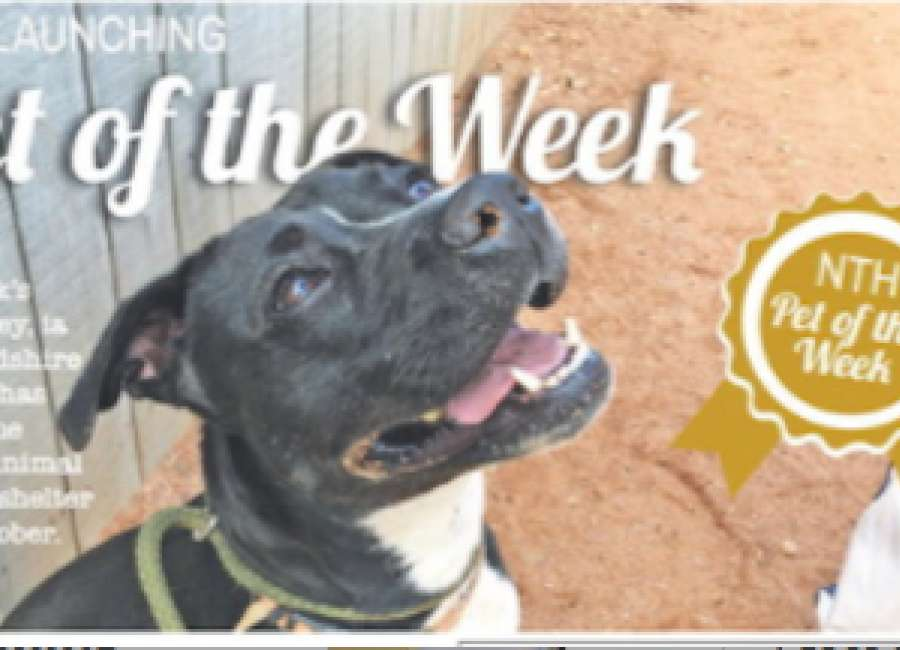 Past Pet of the Week –Bailey