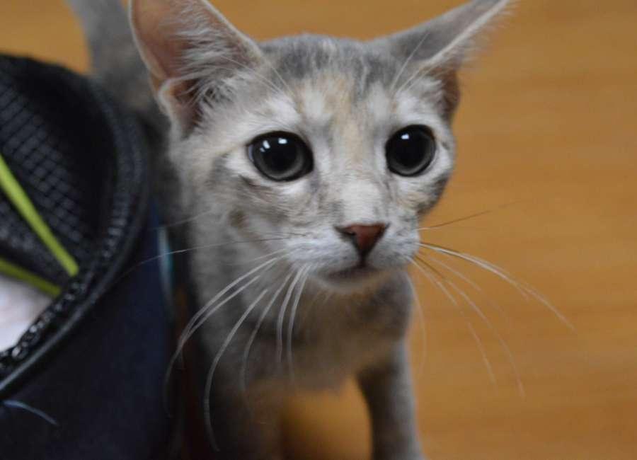 Pet of the Week: Eunice