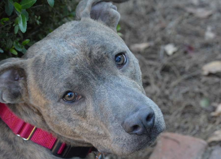 Pet of the Week: Max