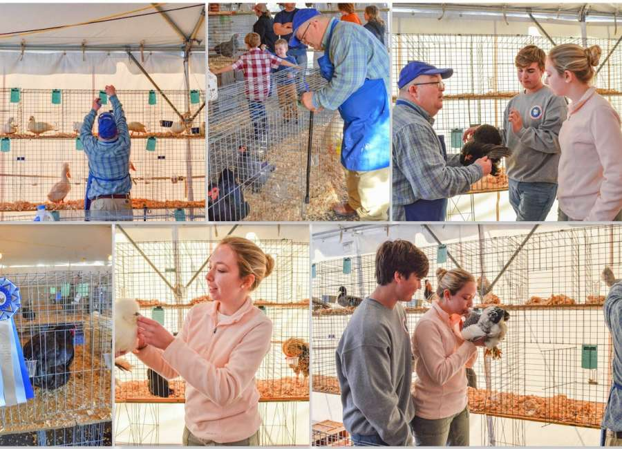 Poultry show draws crowd from near and far