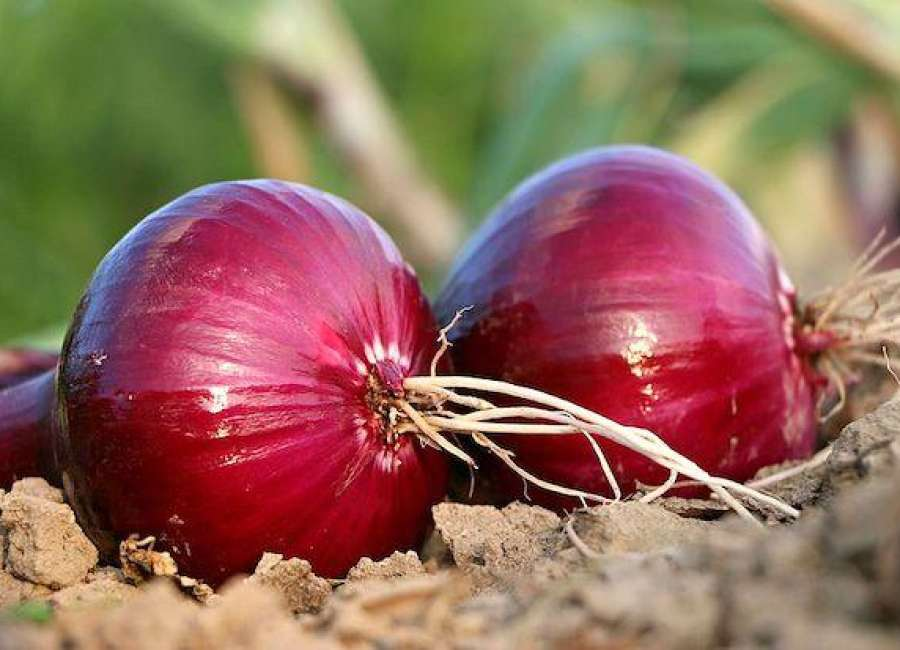 Red onions sicken 640 in 43 states
