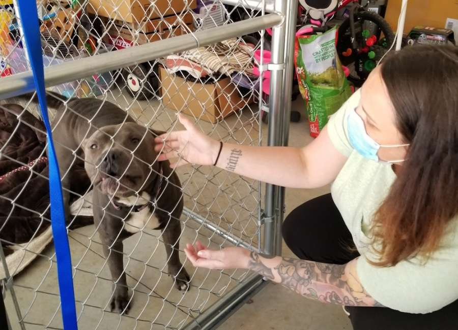 Temporary dog fosters needed while shelter is closed