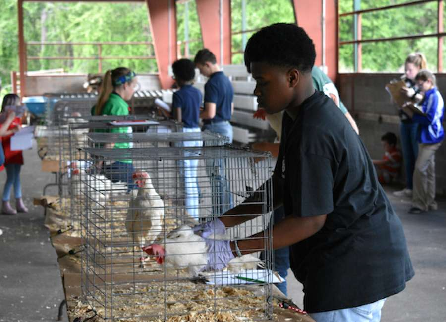 4-H'ers compete at area poultry judging competition