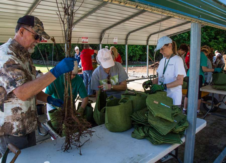 500 oak trees donated for local homeowners