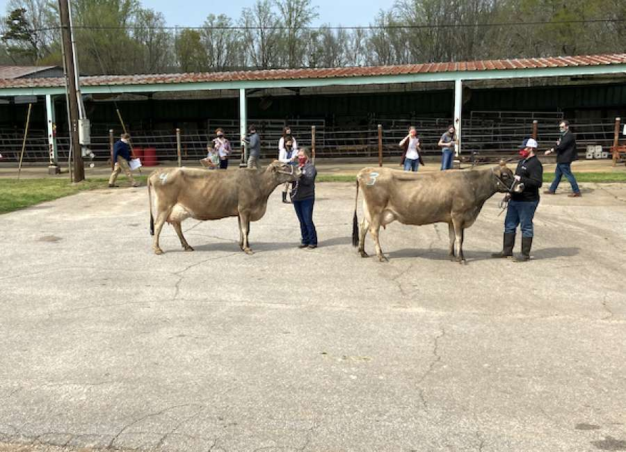 Coweta 4-H'ers place in state dairy judging contest