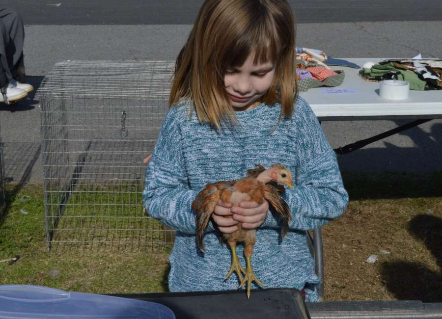 Poultry swap meet Friday, Saturday at Hunter Complex
