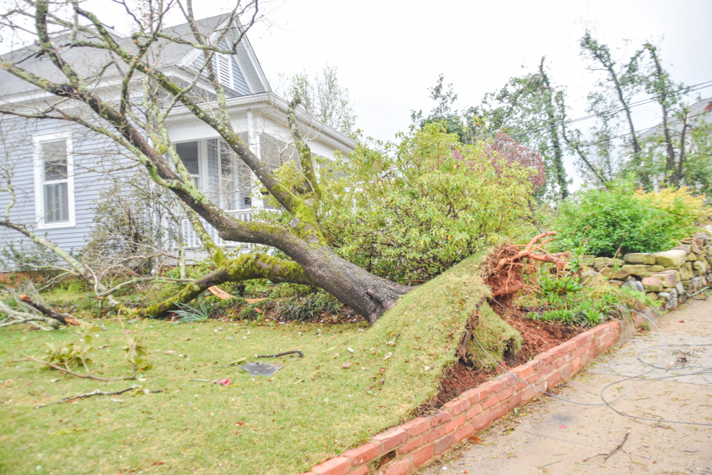 20210327-RRL-Tree-takes-out-yard.jpg?mtime=20210326131811#asset:59627